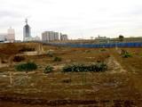 20080202-習志野市谷津・JR津田沼駅南口再開発事業-1256-DSC06821