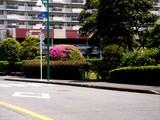 20090510_三井ガーデンホテルズ船橋ららぽーと_ツツジ_1219_DSC06594