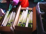 20090307_船橋市市場1_船橋中央卸売市場_楽市_0952_DSC05203