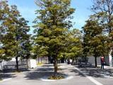 20090329_習志野市芝園1_さくら広場_パナソニック_1208_DSC09340