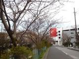 20090329_船橋市宮本9_桜_さくら_0905_DSC08618
