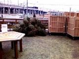 20090118_IKEA船橋_生クリスマスツリー_返却_1250_SN3F0003