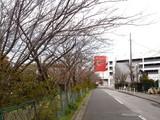 20090329_船橋市宮本9_桜_さくら_0905_DSC08617