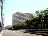 20090510_三井ガーデンホテルズ船橋ららぽーと_ツツジ_1219_DSC06593