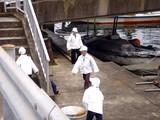 20090405_船橋市湊町_船橋海洋少年団ヨット部_1045_DSC00567