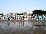 20090510_ふなばし三番瀬海浜公園_潮干狩り_1036_DSC06237