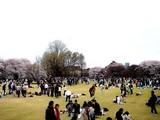 20090404_東京都新宿区_新宿御苑_桜_さくら_1608_DSC00419