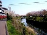 20090411_船橋市_海老川_桜_さくら_1004_DSC02251