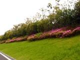 20090504_習志野市花園1_パナソニックさくら公園_1044_DSC05231T