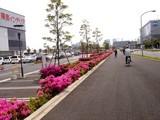 20090504_習志野市花園1_東京インテリア_ツツジ_1036_DSC05181