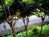 20090523_船橋市夏見6_運動公園_ホタルの里_1249_DSC08747