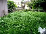 20090516_習志野市袖ヶ浦3_山羊ビリー_ウィリー_1006_DSC07145