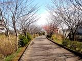 20090307_船橋市_海老川_桜_さくら_1008_DSC05258