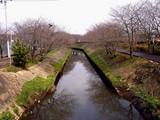 20090320_船橋市_海老川_桜_さくら_1259_DSC06353