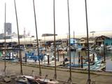 20090405_船橋市湊町_船橋海洋少年団ヨット部_1046_DSC0057