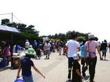 20090510_ふなばし三番瀬海浜公園_潮干狩り_1029_DSC06215