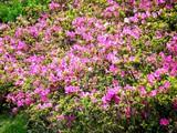 20090504_習志野市花園1_パナソニックさくら公園_1052_DSC05284