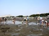 20090510_ふなばし三番瀬海浜公園_潮干狩り_1045_DSC06267