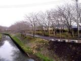 20090320_船橋市_海老川_桜_さくら_1259_DSC06358