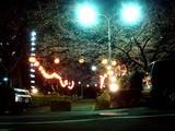 20090326_三井ガーデンホテルズららぽーと_桜_さくら_2114_DSC07786