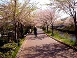 20090411_船橋市_海老川_桜_さくら_1005_DSC02253
