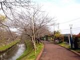 20090320_船橋市_海老川_桜_さくら_1257_DSC06348