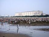 20090510_ふなばし三番瀬海浜公園_潮干狩り_1100_DSC06296