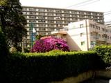 20090502_三井ガーデンホテルズ船橋ららぽーと_ツツジ_1439_DSC05059