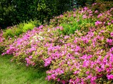 20090504_習志野市花園1_パナソニックさくら公園_1052_DSC05285