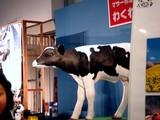20090614_ららぽーとTOKYO-BAY_マザー牧場_体験_1529_DSC00973