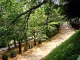 20090523_船橋市夏見6_運動公園_ホタルの里_1248_DSC08740