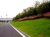 20090504_習志野市花園1_パナソニックさくら公園_1044_DSC05232