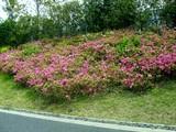 20090504_習志野市花園1_パナソニックさくら公園_1052_DSC05282