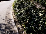 20090410_船橋市浜町2_ららぽーとTOKYO-BAY_桜_0845_DSC02062