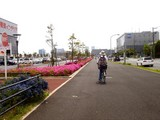 20090504_習志野市花園1_東京インテリア_ツツジ_1036_DSC05176