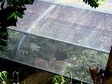 20090523_船橋市夏見6_運動公園_ホタルの里_1249_DSC08749