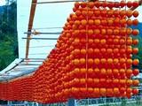 20091226_つるし柿_干し柿_渋柿_110