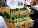 20091108_船橋市農水産祭_船橋中央卸売場_0940_DSC05826