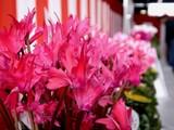 20091108_船橋市農水産祭_船橋中央卸売場_1015_DSC05927