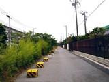 20080809-船橋市若松3・若松小学校前・ひまわり-1700-DSC05012