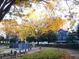 20091201_船橋市本町7_天沼弁天池公園_1537_DSC00093