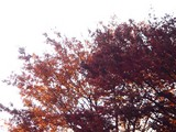 20091128_船橋ファミリータウン公園_紅葉_1420_DSC09264