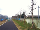 20091024_千葉県道船橋我孫子線_花輪IC方面_1459_DSC03842