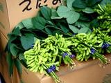 20091108_船橋市農水産祭_船橋中央卸売場_0940_DSC05827