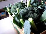 20091108_船橋市農水産祭_船橋中央卸売場_1018_DSC05943