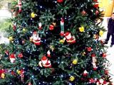 20091206_クリスマス_イルミネーション_Xmas_1129_DSC00963