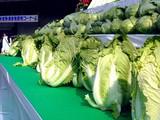 20091108_船橋市農水産祭_船橋中央卸売場_0931_DSC05806
