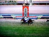 20091227_JRA中山競馬_第54回有馬記念_G1_1539_DSC03658