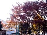 20091128_船橋ファミリータウン公園_紅葉_1420_DSC09262