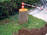 20091010_ららぽーとTOKYO-BAY_アメリカヤシ_1133_DSC00586
